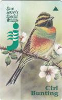 "JERSEY ISL. - Bird, Jersey""s Wildlife/Cirl Bunting, CN : 33JERD(normal 0), Tirage %20000, Used"