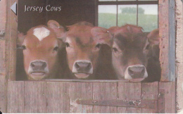 JERSEY ISL. - Jersey Cows, CN : 58JERA, Used