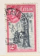 CEYLON  278 D   Perf  11 1/2 X 13  (o)   RUBBER  TREE - Ceylon (...-1947)