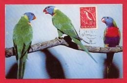 Carte Maximum - Oiseaux - Suriname - Perroquets - Parrots