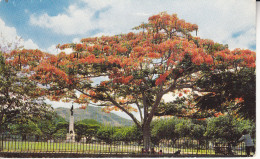 Au Plus Rapide Trinidad - Trinidad
