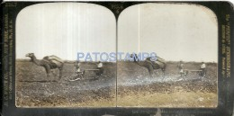 39546 ASIA ISRAEL PALESTINE JUDAICA COSTUMES CAMEL PLOUGHING ON THE PLAINS OF SHARON STEREO VIEW NO POSTAL POSTCARD - Zonder Classificatie