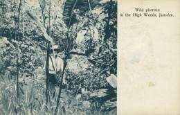 JM JAMAIQUE DIVERS / Wild Plantain In The High Woods / - Autres