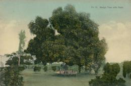 JM JAMAIQUE DIVERS / Mango Tree With Fruit / CARTE COULEUR - Autres