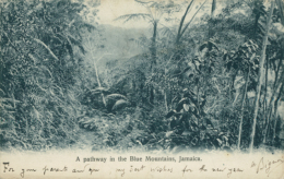JM JAMAIQUE DIVERS / A Pathway In The Blue Mountains / - Autres