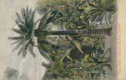 JM KINGSTON / Sago Palms, Castleton Gardens / CARTE COULEUR - Autres