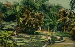 JM KINGSTON / Castleton Gardens / CARTE COULEUR GLACEE - Autres