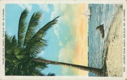 PA PANAMA DIVERS / Palma De Coc, Sarati, San Blas, Coconut Palm  / CARTE COULEUR - Panama