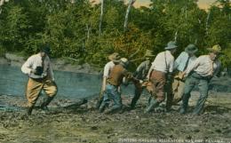 PA PANAMA DIVERS / Hunters Hauling Alligator To Camp / CARTE COULEUR GLACEE - Panama