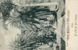 TT TRINIDAD AND TOBAGO DIVERS  / / Palms Botanical Gardens / - Trinidad