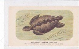 "CARD TARTARUGA-TORTUE ""CHE'LONE'E FRANCHE""  FIRMA E.C.-FP-VDB-2-0882-25303 - Turtles"