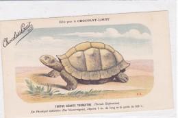 "CARD TARTARUGA-TORTUE ""TORTUE GEANT TERRESTRE"" ISOLE MASCAREIGNES PUB ""CHOCOLAT-LOUIT  FIRMA E.C.-FP-N-2-0882-25304 - Turtles"