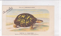 "CARD TARTARUGA-TORTUE ""TORTUE  A TABATIERE ""  PUB ""CHOCOLAT-LOUIT  FIRMA E.C.-FP-N-2-0882-25305 - Tortugas"