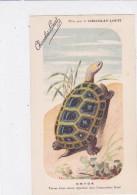 "CARD TARTARUGA-TORTUE ""EMYDE ""  PUB ""CHOCOLAT-LOUIT  FIRMA E.C.-FP-N-2-0882-25307 - Tortugas"