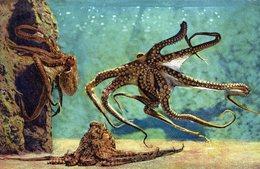 CPA FANTAISIE PHOTO OCTOPUS VULGARIS (Poulpe) AQUARIUM DE MONACO - Fische Und Schaltiere