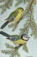 CPA FANTAISIE Dessin MÉSANGE BLEUE Ext. Guide Des Oiseaux De France - Birds