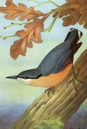 CPA FANTAISIE Dessin  LA SITTELLE Extrait Guide Des Oiseaux De France - Birds