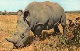 CPSM FANTAISIE PHOTO RHINOCEROS Musée National D'Histoire Naturelle Parc Zoologique Paris - Rhinocéros