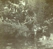 France Vacances En Cote D'Azur Lac Jardins Ancienne Photo Amateur Stereoscope Pourtoy 1900 - Stereoscopic