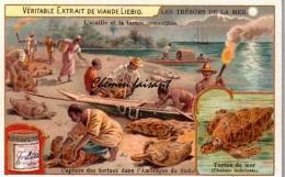 Chromo LIEBIG -  Trésors De La Mer : Tortue De Mer - Scans  Recto Verso - Liebig
