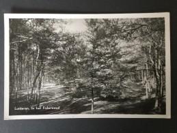 Lunteren,In Het Fislerwoud----Uitgave: J.Oosterhagen,Lunteren----gelopen 1951 - Andere