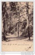 DINANT ..-- Jardin Du Casino . Nels 7 , N° 120 . 1901 Vers BOUILLON ( Melle Lucie BRACONNIER ) .  Voir Verso . - Dinant
