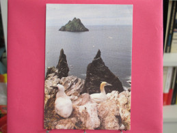 Irlande - Kerry - Gannets And The Skelling Rocks - Très Bon état - Joli Timbre - Scans Recto-verso - Kerry