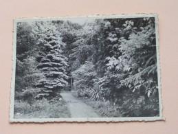 Kostschool Voor Meisjes H. Vincentius à Paulo ( Beschreven Vooraan ) Anno 1948 ( Zie Foto Voor Details ) !! - Wachtebeke