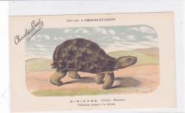 "CARD TARTARUGA-TORTUE ""CINIXIDE""  PUB ""CHOCOLAT-LOUIT  FIRMA E.C.-FP-N-2-0882-25309 - Turtles"