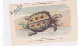 "CARD TARTARUGA-TORTUE ""TRIONIX""  PUB ""CHOCOLAT-LOUIT  FIRMA E.C.-FP-N-2-0882-25312 - Turtles"