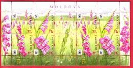 R* MOLDOVA SHEETLET 8 V. WWF FLOWERS SABIUTA GLADIOLUS IMBRICATUS 2016 - Moldova
