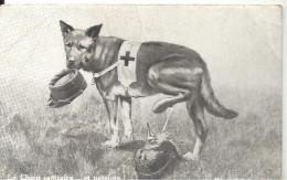 GUERRE 14/18  - Le Chien Sanitaire ... Et Patriote - Guerre 1914-18