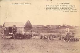 AM.V.R.16-116  :  LA MOISSON EN BEAUCE  EDITION CALLAULT A MER LES MOUTONS AGRICULTURE ELEVAGE - France