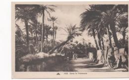 3026 Postal   Dans La Palmeraie , Palmeras Animada, Algeria - Árboles