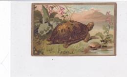 CARD TARTARUGA-TORTUE  CROMOLITO PUB. PHARMACIE AUGAGNEUR SAINT-CHAMOND 2 SCNNER-2-0882-25314-313 - Tortugas