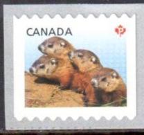 Canada - Bébés Animaux 2013 - Timbre De Roulette Horizontale ** - Roulettes