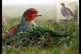 ESTONIA 2013 MAXIMUM CARD Bird Of The Year – Partridge - Perdiz Pardilla & Colín