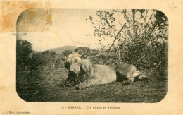 ETHIOPIE(HARRAR) LION - Ethiopie