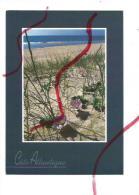 Cpm St001941 Liseron Des Sables Et Oyats Aident à La Fixation Des Dunes (flamme Royan) - Plantes Toxiques