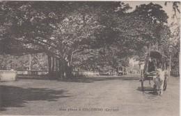 CEYLAN - Colombo - Une Place - Attelage - Sri Lanka (Ceylon)