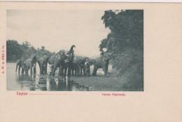CEYLAN - Éléphants - Sri Lanka (Ceylon)