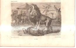 52364) Stampa Del 1800  Di R.kretssch-le Lion 20x30 Cm. - Autres Collections