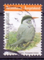 Belgie - 2013 - OBP - 4306 - Noorse Stern - Vogels - A.Buzin - Gestempeld - Oblitérés