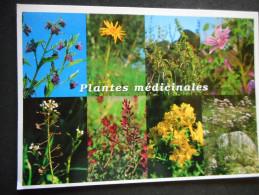 """CP """"PLANTES MEDICINALES- (Fleurs Sauvages Familières Et Méconnues ... Ediions DEBAISIEUX) - Plantes Médicinales"""