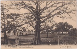 Cpa,afrique,CONAKRY,capit Ale  De La République De La Guinée,magasins Des Douanes,arbre Centenaire - Guinée Française