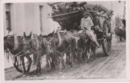 Argentine,argentina - Carro,attelage,anes,mulet S Transport Bois  Tipico -termas De Rio Hondo,carte Photo,amerique Du Su - Argentina