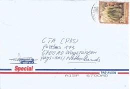 DRC Congo 2003 Kinshasa Haworthia Cooperi Succelent Cactus Cover - Democratic Republic Of Congo (1997 - ...)