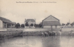 Les Bruyères-Radon 58 - Abreuvoir Vaches Ferme Du Gros-Chêne - France