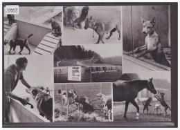 FORMAT 10x15 - LAUSANNE - REFUGE POUR ANIMAUX DE SAINTE CATHERINE - TB - VD Vaud