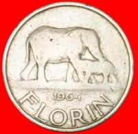 § ELEPHANT: MALAWI ★ FLORIN 1964! YEAR=TYPE! LOW START★NO RESERVE! Banda (1963-1994) - Malawi